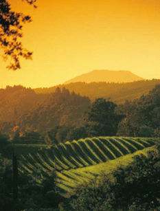 sunset-rolling-vineyard_2801-e1307969405401